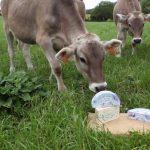Lot. Le Bleu des Causses utilise du lait lotois.