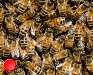 Musée des abeilles à Rocamadour dans le Lot