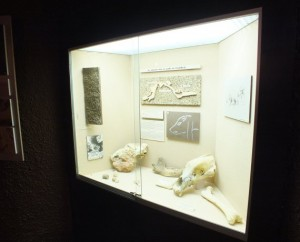 Musée préhistorique de Pech Merle à Cabrerets