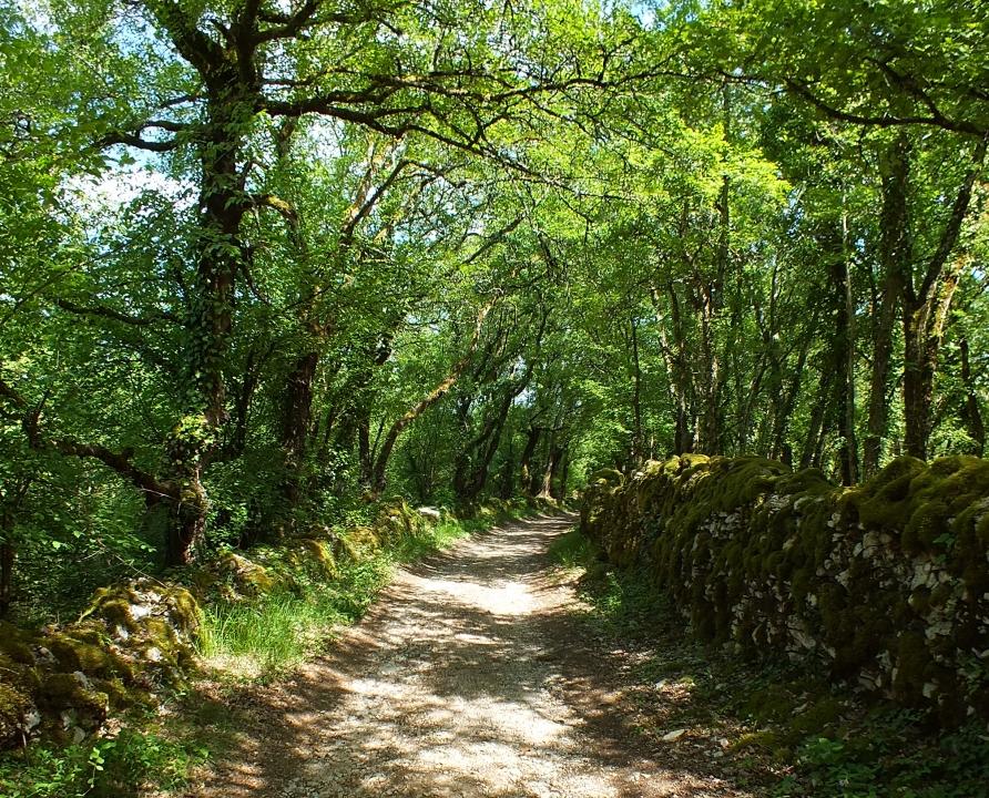 Circuits randonnée pédestre - Limogne en Quercy - Circuit des 3 dolmens - 8km (chemin près du Lac d'Aurié à Limogne-en-Quercy)