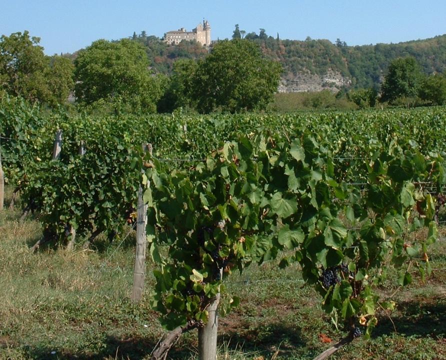 Circuit VTT - Pradines - Balade sur les Berges du Lot - 5km (Le vignoble de Cahors à Pradines)