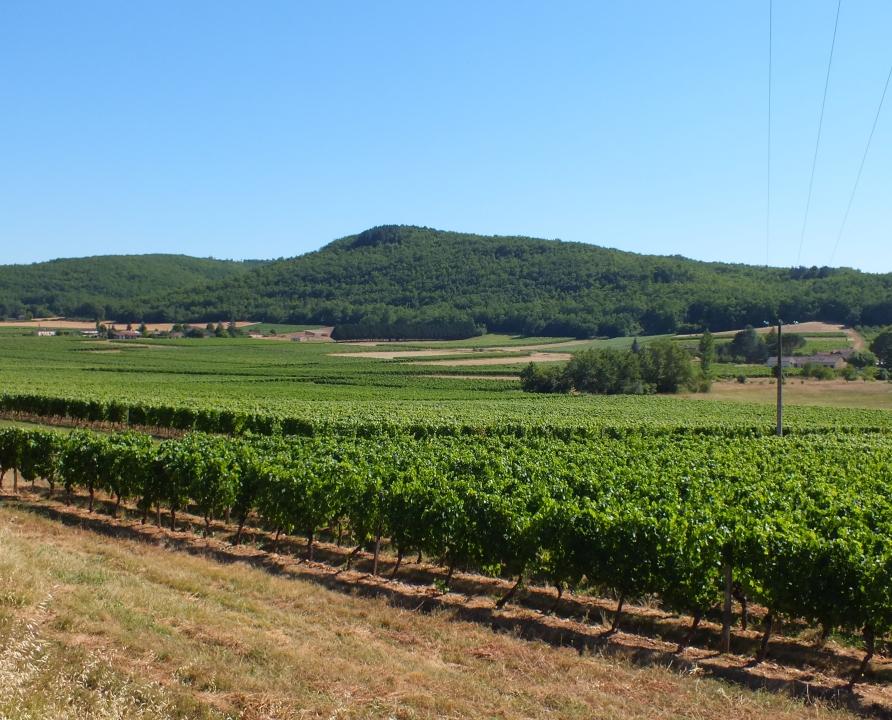 Circuit VTT - Puy-l'Evêque - Du Puech aux Vignes - 14km (Vignoble de Cahors à Vire-sur-Lot)