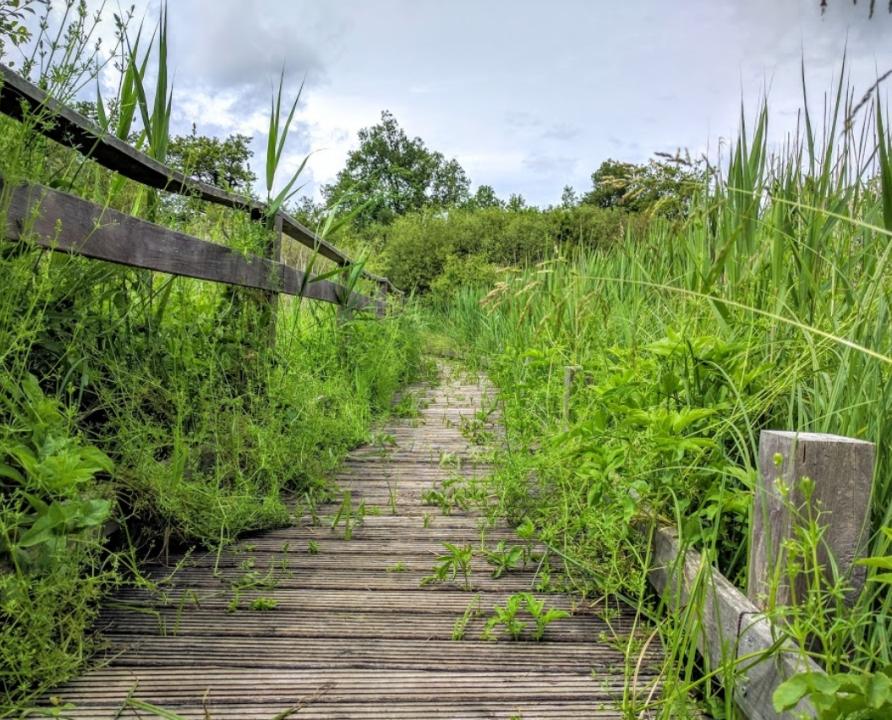 Circuits randonnée pédestre - Padirac - Le circuit de Padirac-Bonnefont - 17km (Marais de bonnefont)