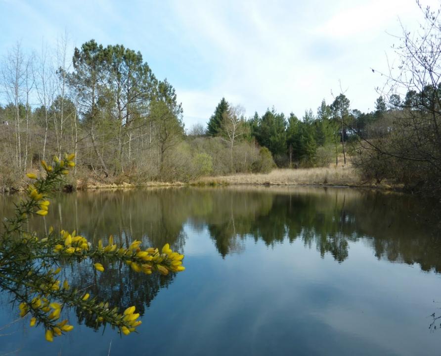 Circuits randonnée pédestre - Peyrilles - Le circuit de Dégagnazès - 14km (Lac de la Forêt de Frau à Lavercantière)