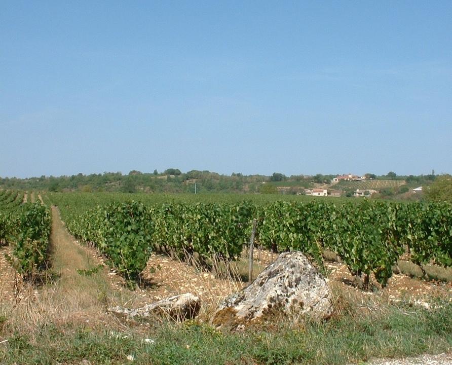Circuits randonnée pédestre - Sauzet - Circuit de Lissourgues - 9km (Les vignes de Sauzet)
