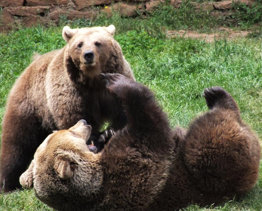 Parcs animaliers - Gramat - Parc animalier de Gramat (Ségalières) -