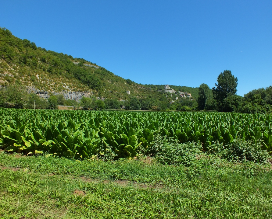Campagnes - Montbrun - Campagnes (Cournoulises) -