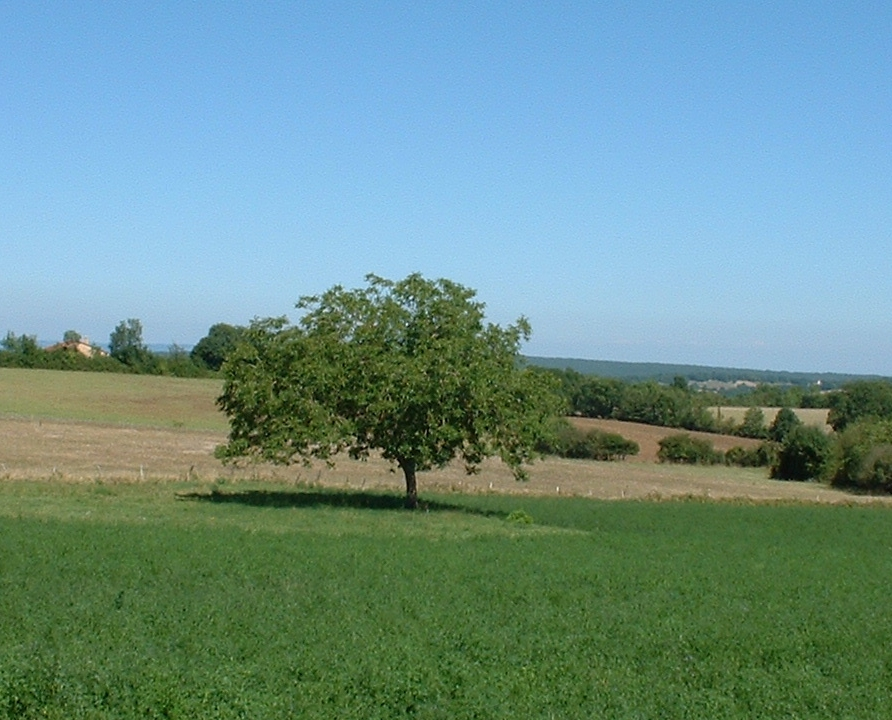 Campagnes - Soulomès - Campagnes (bourg) -