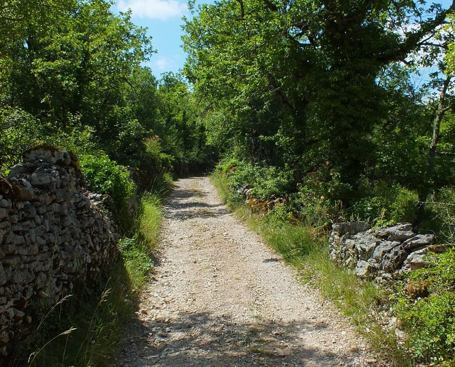 Circuits randonnée pédestre - Limogne-en-Quercy - Les Dolmens de Limogne - 9km