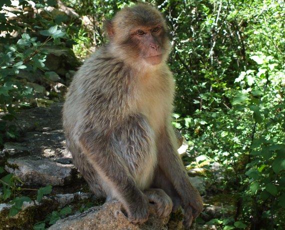 La forêt des singes à Rocamadour dans le Lot