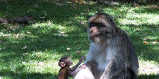 Forêt des singes à Gramat dans le Lot